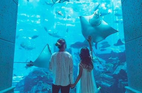 休日デートは水族館がおすすめ